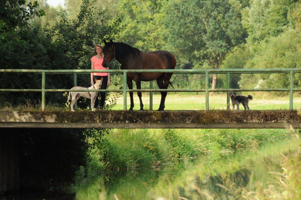 Pferdeseminar Sabine Schreek, Startseite
