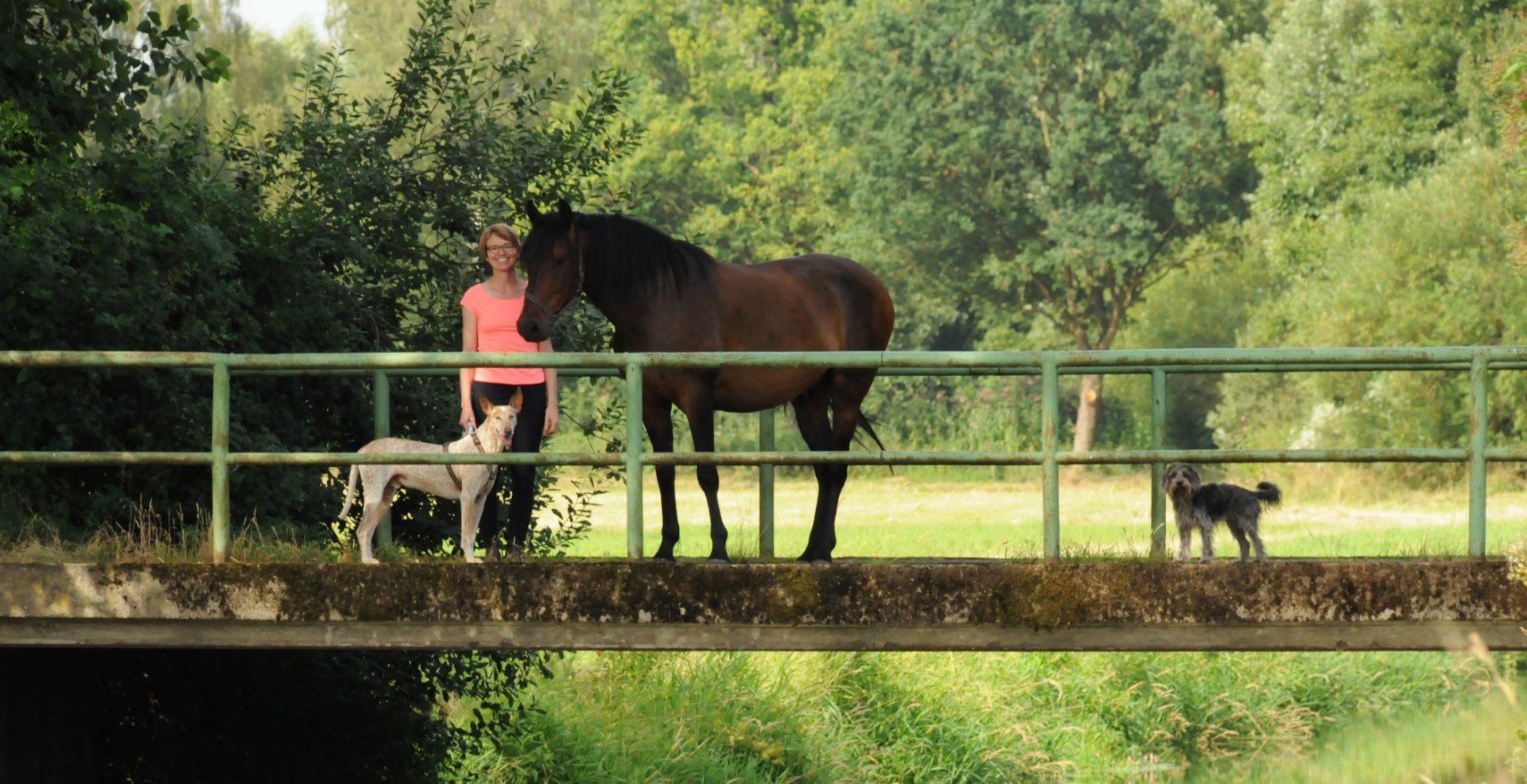 Pferdeseminar Sabine Schreek
