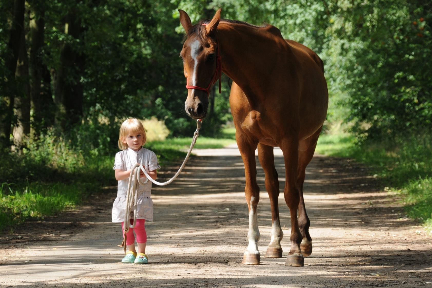 Landpartie mit Pferd