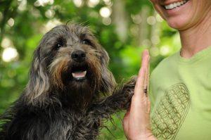 Hunde aus dem Tierschutz