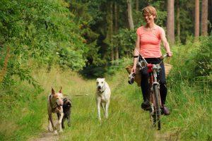Hunde aus dem Tierschutz, Pferdeseminar