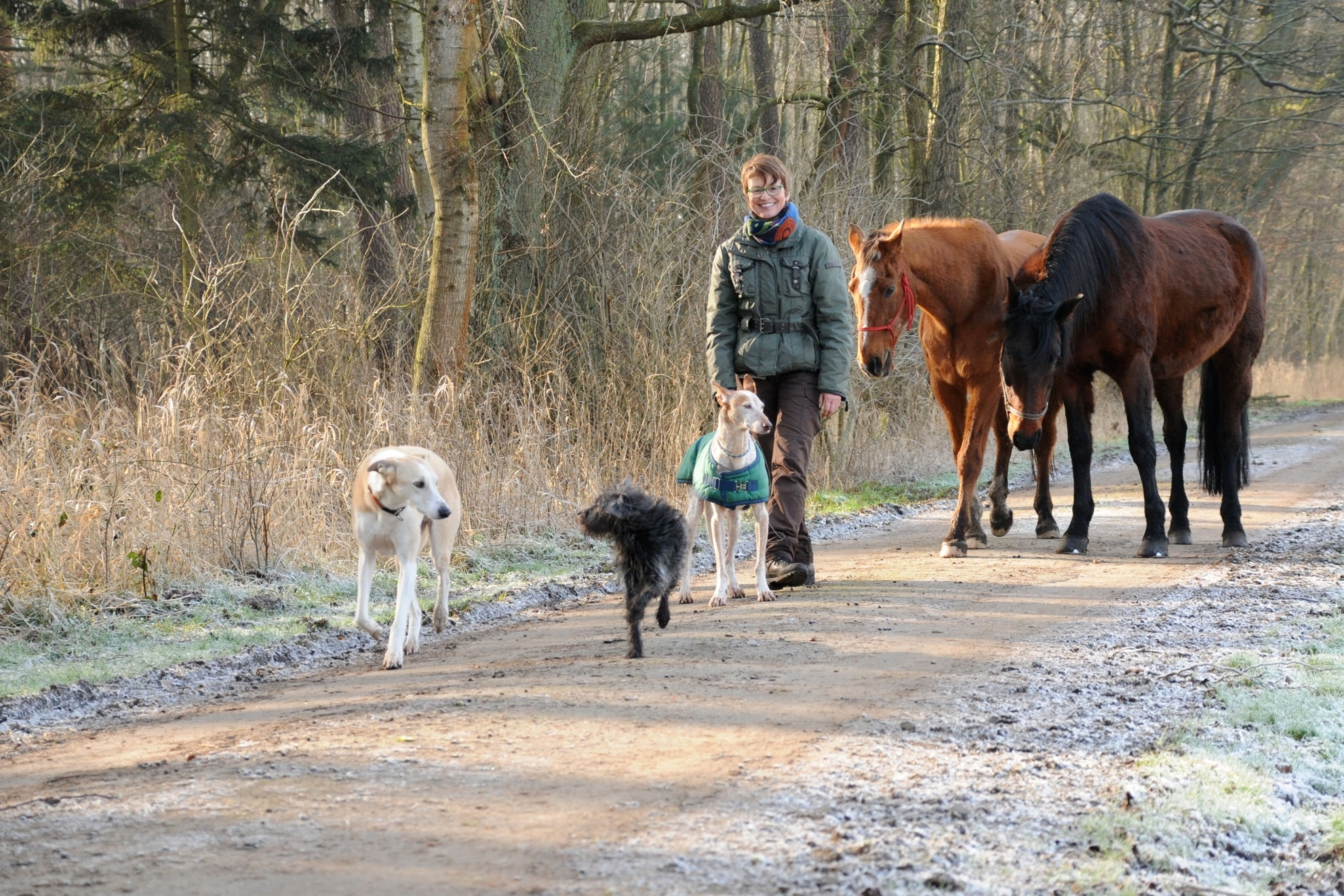 Winterspaziergang mit Pferd, Betriebsausflug Team Pferdeseminar