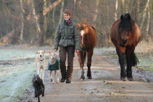 Winterspaziergang, Landpartie mit Pferd und Hund