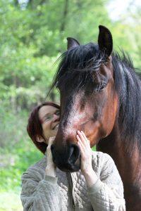 Pferdesprache (sehen) lernen, Pferdesprache ist Köpersprache