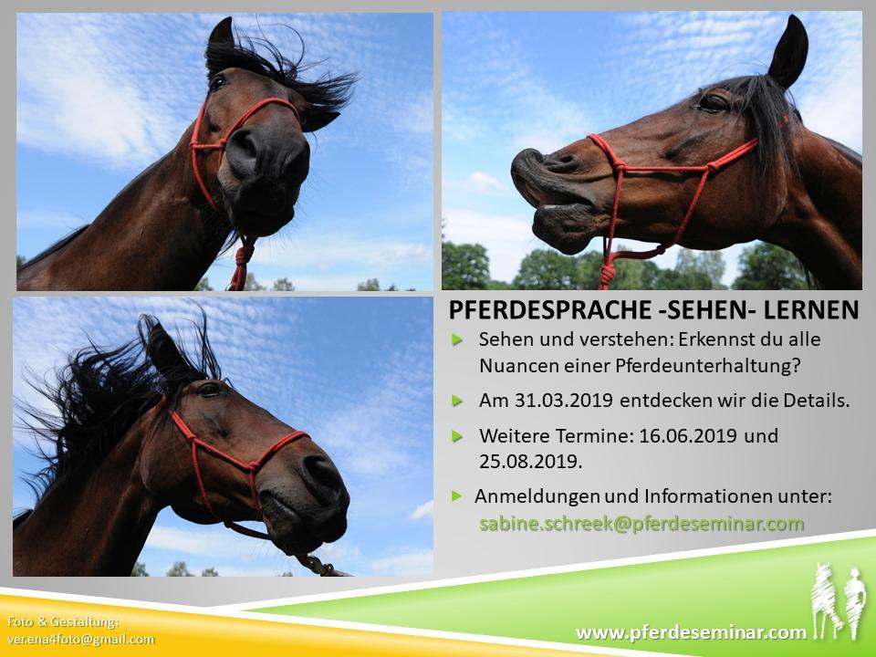 Pferdeseminar: Pferdesprache -sehen- lernen