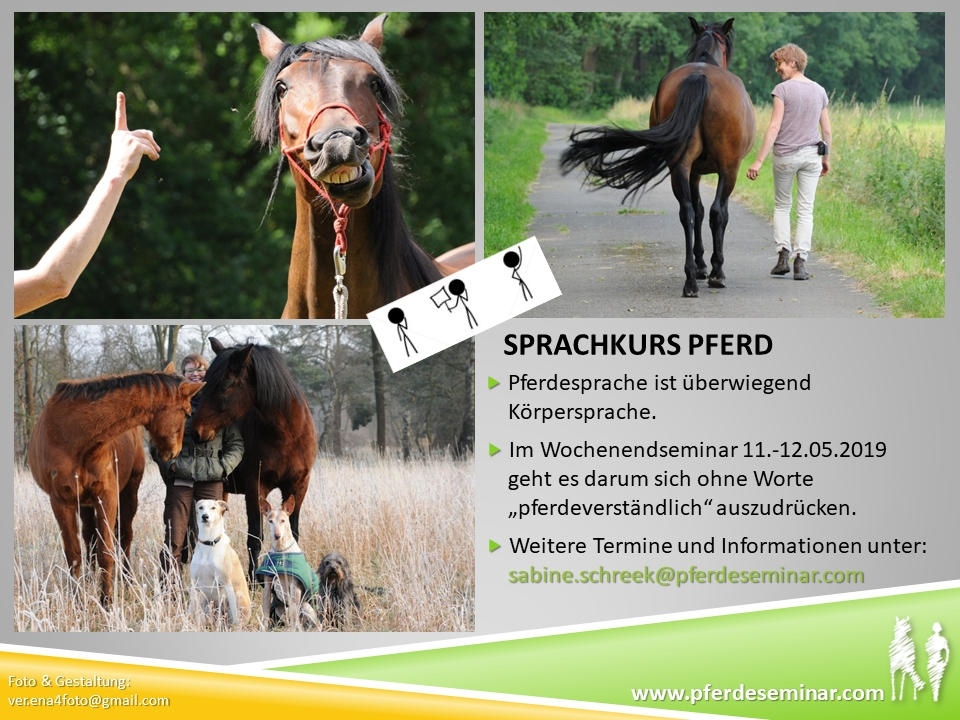 Flyer Sprachkurs Pferd